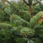 Куди подіти новорічну ялинку після свят?